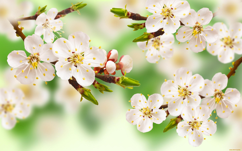 все картинки весна на рабочий стол начальная правило, сотрудники